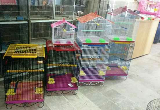 Birds Paradise - Bird Accessories Karachi