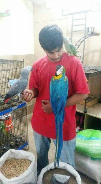 Birds Paradise - Parrots Breeder Karachi