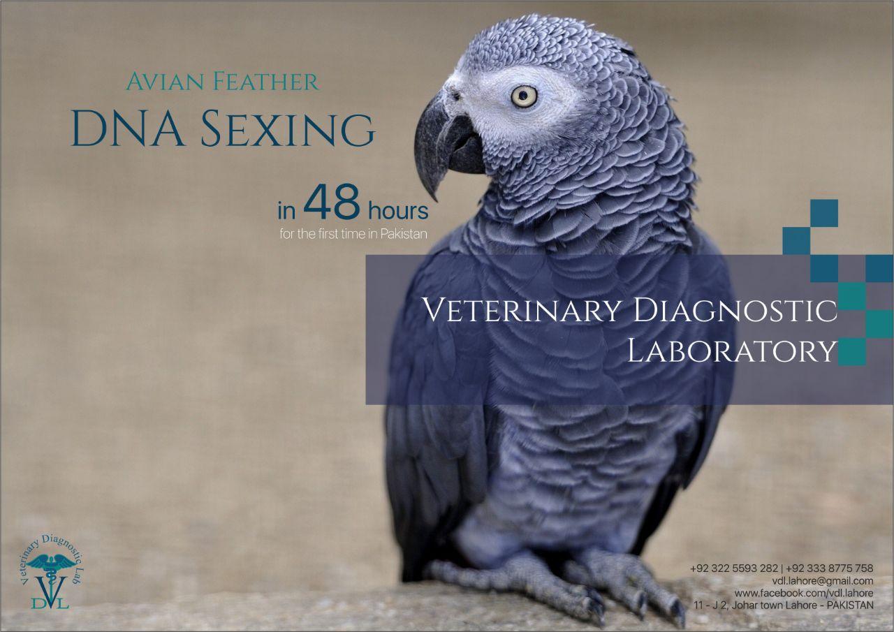 Birds DNA Sexing in Pakistan