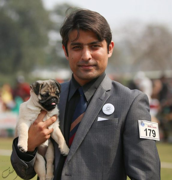 Kennel Hilltop Pugs - Lahore
