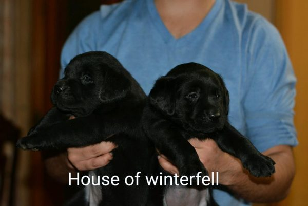 House of Winterfell Kennels - Lahore