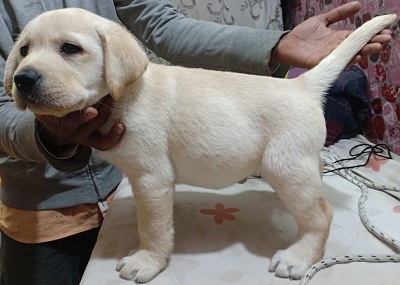 Nathan Kennels - Lahore