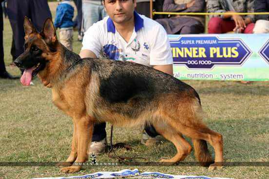 Kennel Vom Royal Star - Lahore